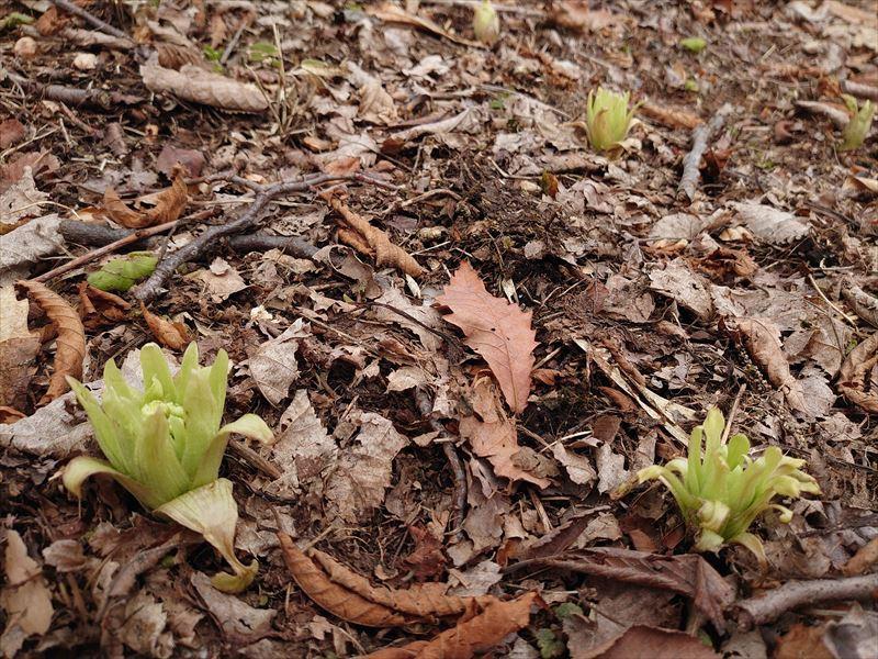 まちわびた春の訪れ。